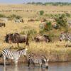 Mara-Safaris