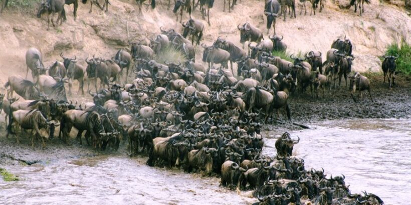 3 Days Masai Mara Wildebeest Migration Safari