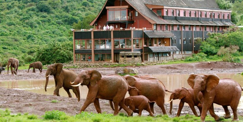 The Ark Game lodge