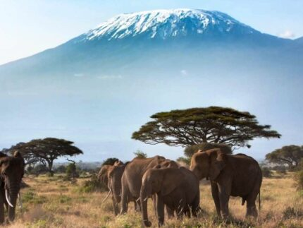 A Taste of Kenya Safari