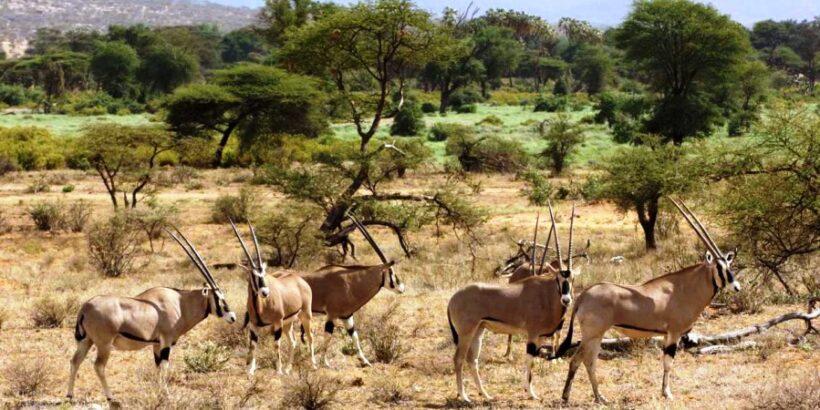 samburu-safaris