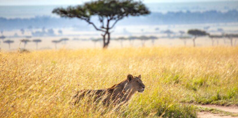 savannah-Mara