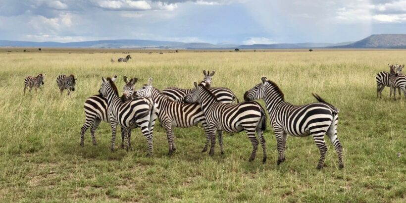 8 Days Best of Tanzania Safari