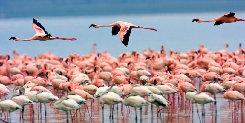 Lake-Nakuru-National-Park