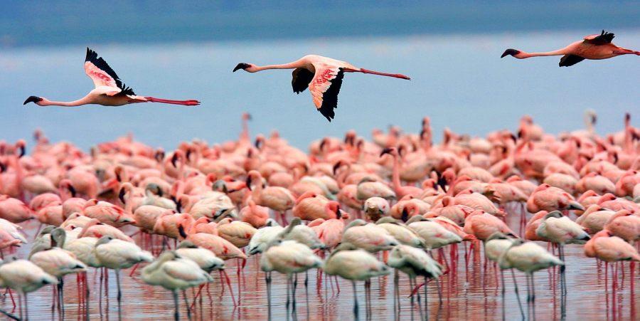Lake Nakuru National Park - Flamingos