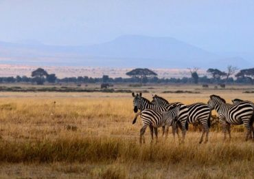 3 days Amboseli National Park