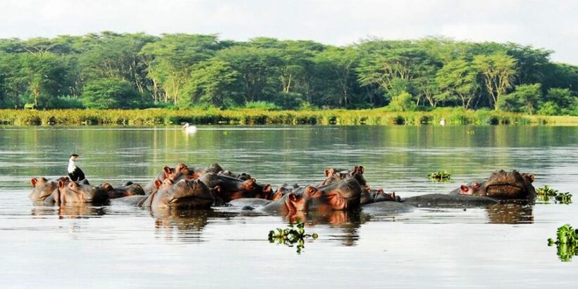 Lake-Naivasha