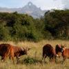 Mt-kenya-National-park