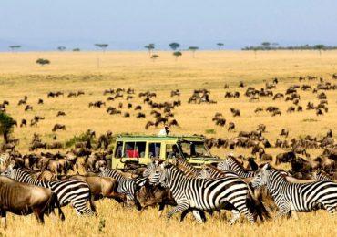 Serengeti-wildebeest