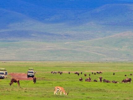 13 Days Best of East Africa Safari