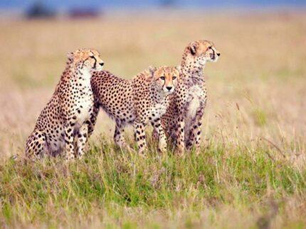 7 days Arusha, Manyara, Serengeti, Ngorongoro and Tarangire safari