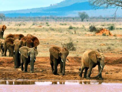 5 Days Kenya Mid Range Safari to Tsavo East, West & Amboseli