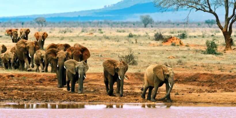 5 Days Kenya Mid Range Safari to Tsavo East, West & Amboseli