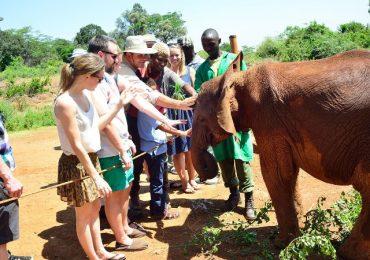 Elephant Orphanage3