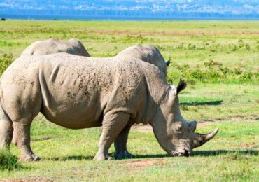 Nakuru Rhino Conservancy