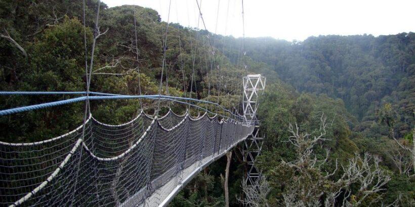 Nyungwe-forest2