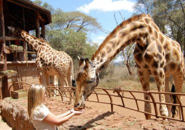 Best of Nairobi City: Nairobi National Park, David Sheldrick & Giraffe Centre