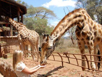 Best of Nairobi City: Nairobi National Park, David Sheldrick & Giraffe Centre