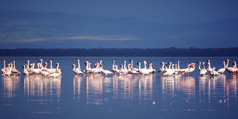 Lake-Nakuru-Flamingo-Kenya-Africa-Xiaojun Deng