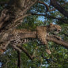 4 Day Luxury Safari to Lake Nakuru & Maasai Mara