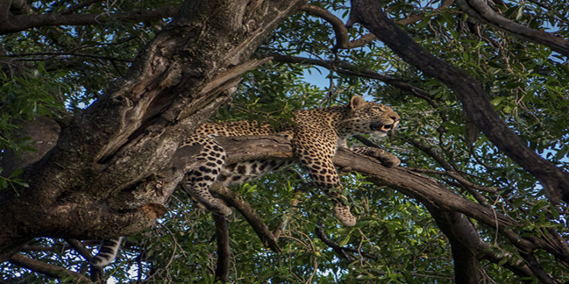 4 Day Luxury Safari to Lake Nakuru & Maasai Mara