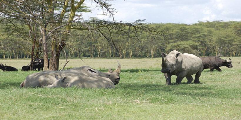 Rhinos-Lake-Nakuru-Kenya-Africa-Joachim Huber