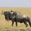 nature-wilderness-meadow-prairie-adventure-animal-975514-pxhere.com